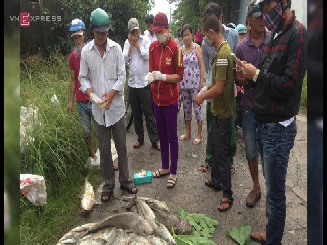 Người dân Vũng Tàu chở cá chết ra chặn quốc lộ