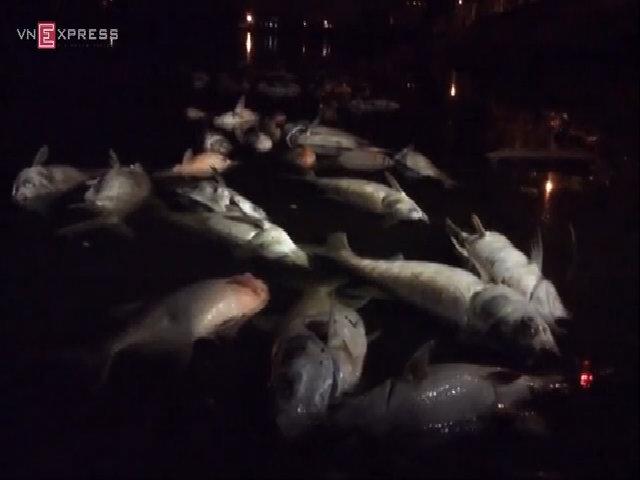 Hàng nghìn con cá cá chết nổi trên mặt hồ Linh Đàm