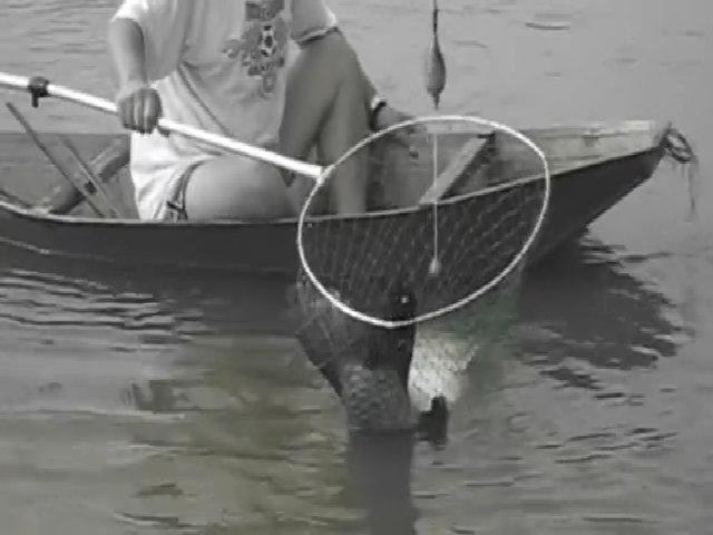 Cá trắm 'khủng' vùng vẫy trăm mét khi mắc câu ở hồ Hà Nội
