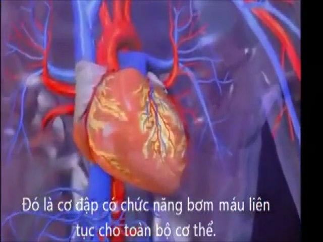Diễn tiến cơn nhồi máu cơ tim chết người