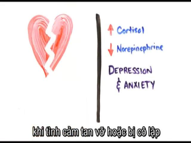 Tại sao bạn thấy đau tim khi bị thất tình?