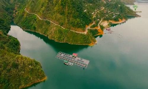 Ngược dòng Đà giang, tìm hiểu mô hình nuôi cá lòng hồ thủy điện