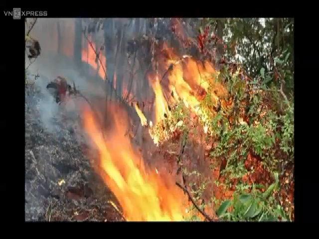 Cháy rừng Hải Phòng ngày mồng 3 Tết