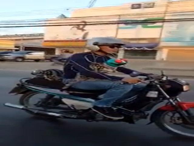 Mèo đi xe máy đội mũ bảo hiểm siêu anh hùng