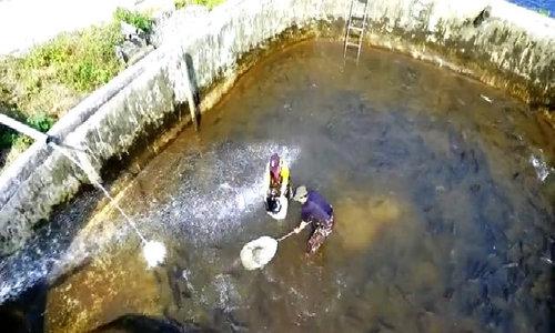 Nuôi thành công cá hồi vân xứ lạnh tại Việt Nam