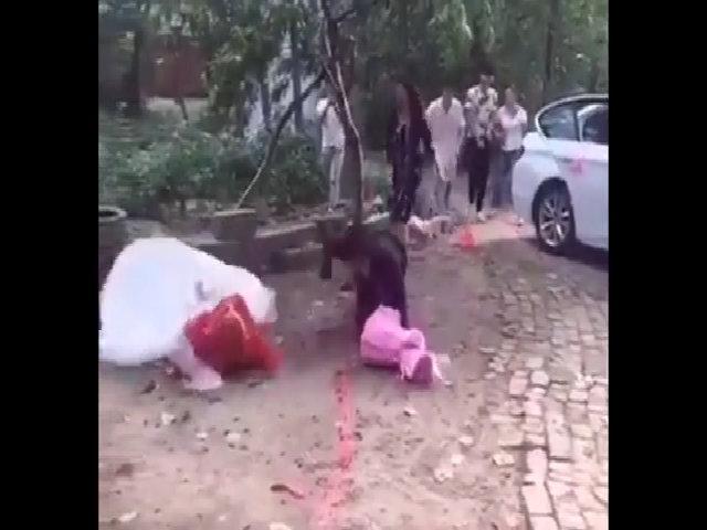 Chú rể hốt hoảng vì khiến cô dâu ngã sấp mặt trong ngày cưới