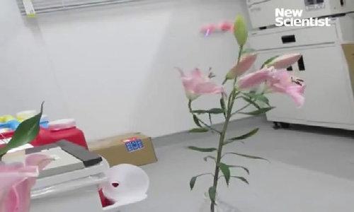 Dùng ong robot thụ phấn cho cây trồng