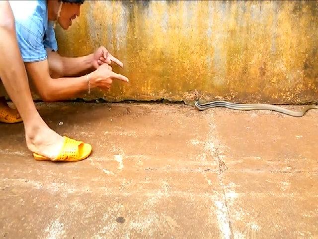 Thanh niên chơi đùa với rắn hổ ngựa trong sân