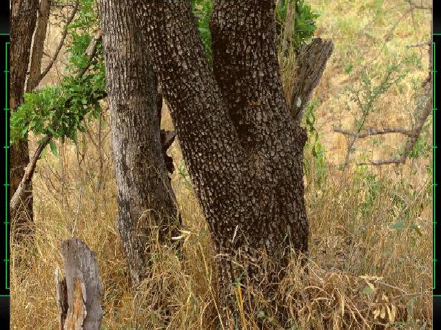 Tìm con vật đang ẩn trong bức ảnh