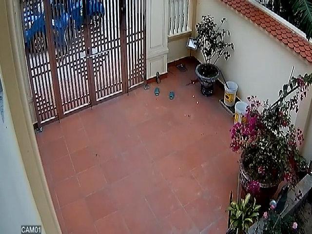 Lái taxi đi trộm chó ở Hải Phòng