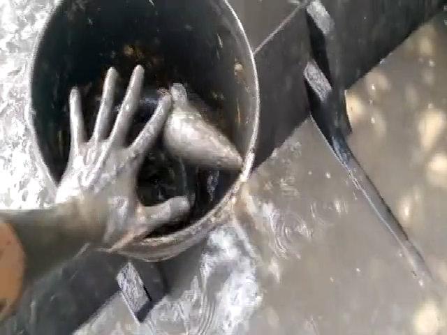 Nông dân hò reo thấy đàn cá lóc trốn trong ống nhựa dưới ao