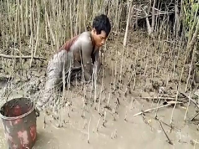 'Cao thủ' thọc tay bắt cá bống sao dưới bùn sâu một mét