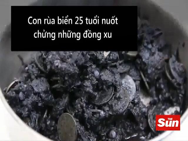 Mổ bụng gắp 1.000 đồng xu giải cứu rùa Thái Lan