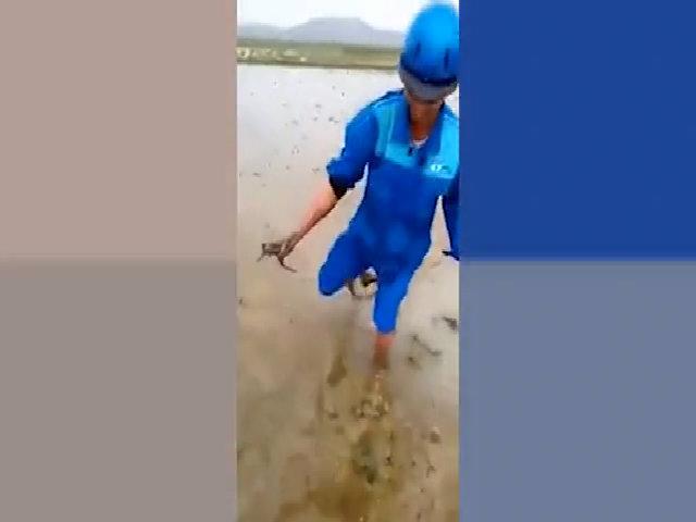 Người nông dân thọc tay bắt 60 con lươn trốn dưới ruộng bùn