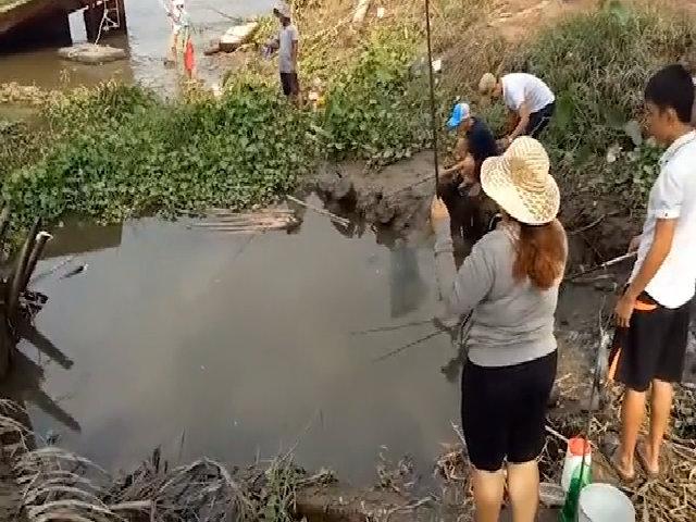 Bộ đôi 'sát thủ' giật cá rô liên tục trên sông Sài Gòn