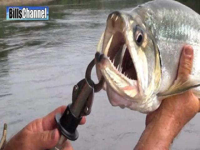 Những loài động vật có miệng đáng sợ như quái vật
