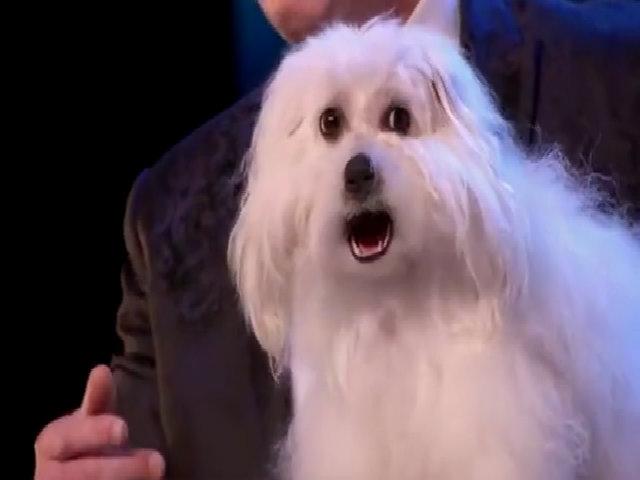 Chú chó biết nói khiến cả trường quay Britain's Got Talent kinh ngạc