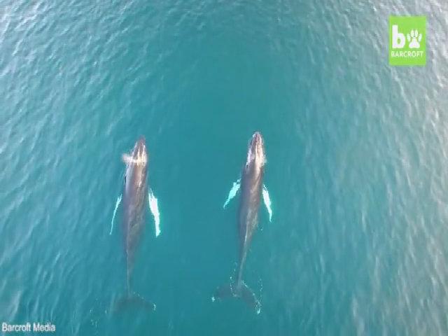Đàn cá voi hàng trăm con làm đau đầu giới khoa học Nam Phi