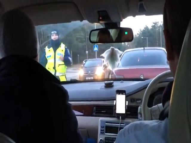 Cảnh sát kiểm tra nồng độ cồn hành khách thay vì tài xế