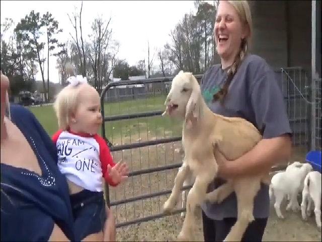 Màn so kè giữa em bé và chú dê con
