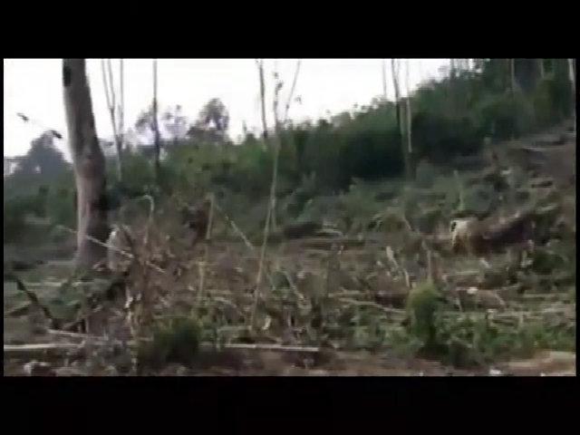 Giải cứu đàn voi 11 con mắc kẹt dưới hố bùn