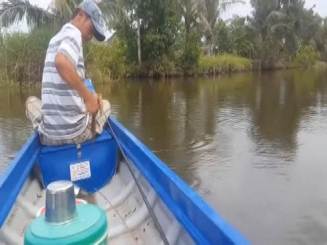 Bộ tứ giật cá rô liên tục trong rừng U Minh