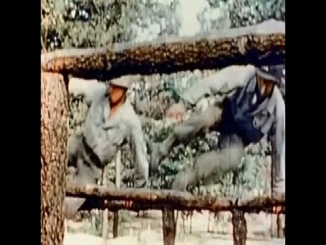 Bị kỳ thị, trung đoàn gốc Nhật trở thành đơn vị giàu thành tích nhất lịch sử Mỹ