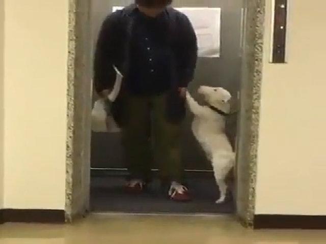 Chú chó nhảy múa không ngừng mừng chủ nhân trở về nhà