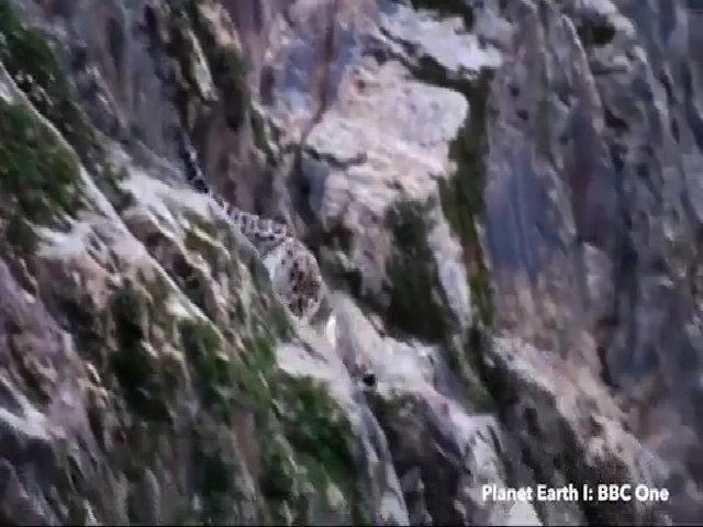 Sát thủ tàng hình săn dê núi trên dãy Himalayas