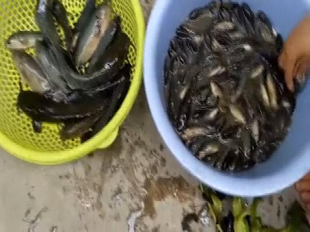 Hai 'sát thủ' câu được 4 kg cá rô ở Sài Gòn