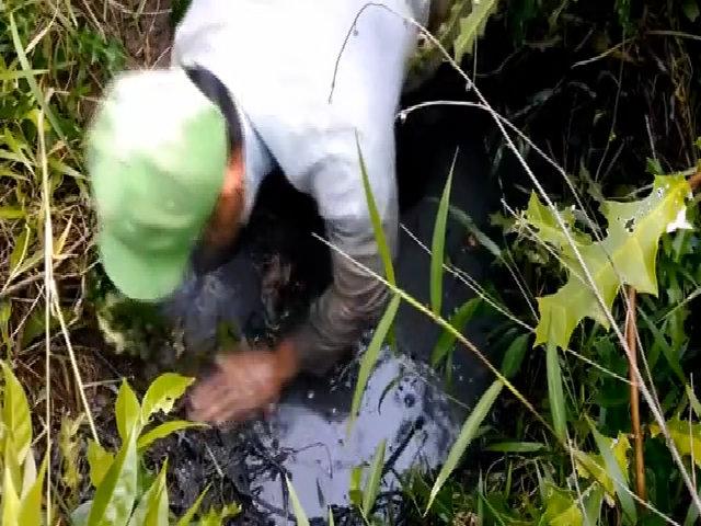 Bắt ổ 6 con cá trê trắng ở ao bỏ hoang