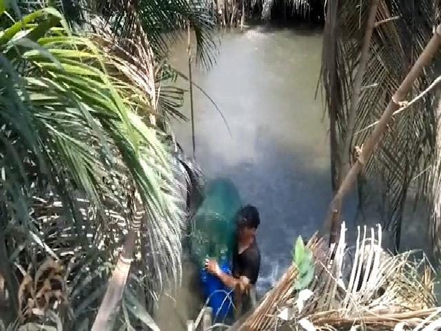 Bắt cá 'trời cho' bằng bẫy zíc zắc trên kênh Sài Gòn