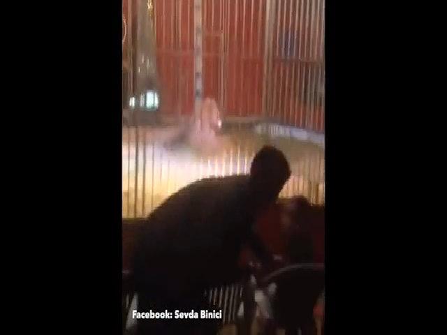 Sư tử lao tới vồ cắn huấn luyện viên trong rạp xiếc Pháp