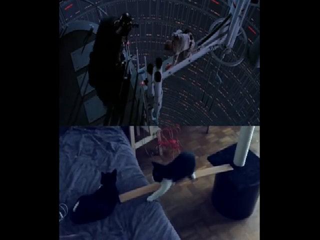 Khi mèo hóa thân thành các nhân vật trong phim Star Wars