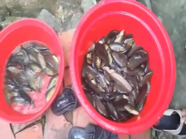 4 'sát thủ' giật cá rô liên tục bằng mồi ong rừng