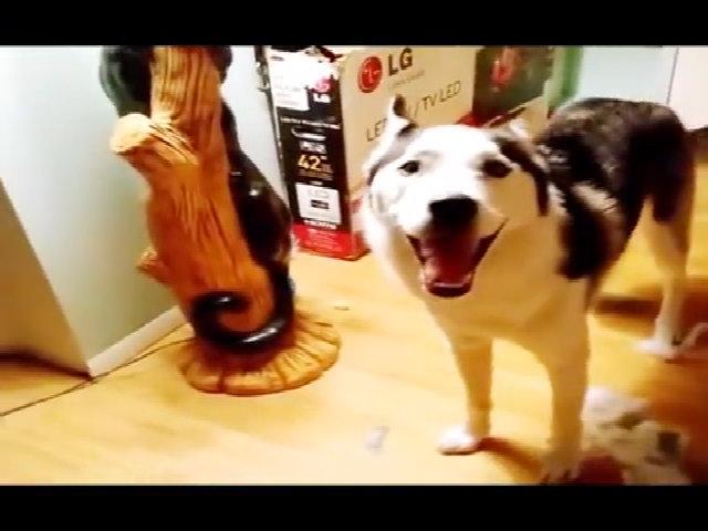 Chú chó trả treo với chủ sau khi quậy phá
