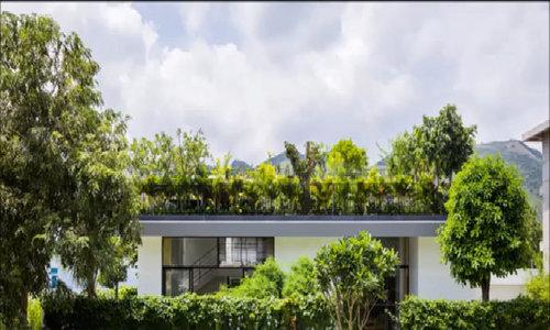 Vườn Việt vào top 10 các vườn trên mái ấn tượng