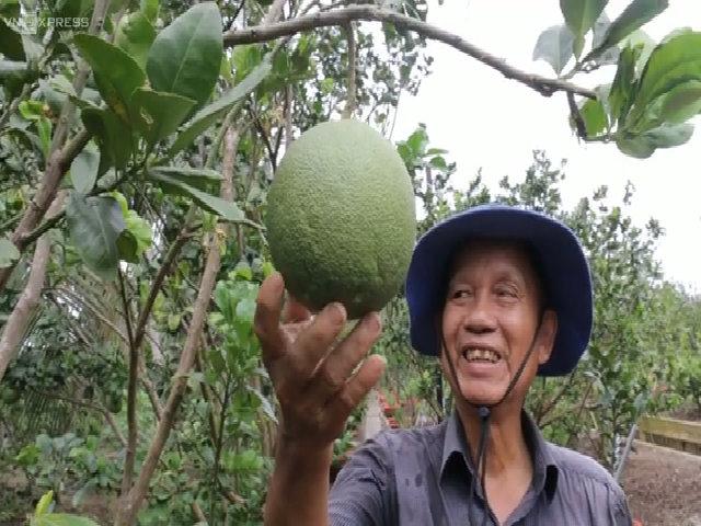 Thú vui cuốc vườn, nuôi cá của nguyên Phó Thủ tướng Trương Vĩnh Trọng
