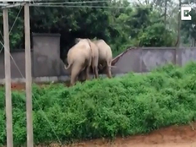 Bầy voi hợp sức ủn đổ tường trốn thoát sau khi phạm tội