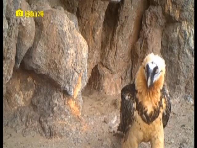 Nhiều loài sống chung trong hang Trung Quốc ở độ cao 5.000 mét