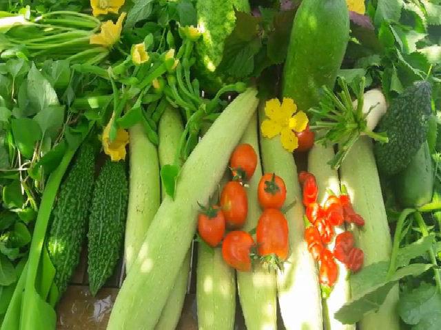 Thu hoạch vườn rau trĩu quả ở Sài Gòn
