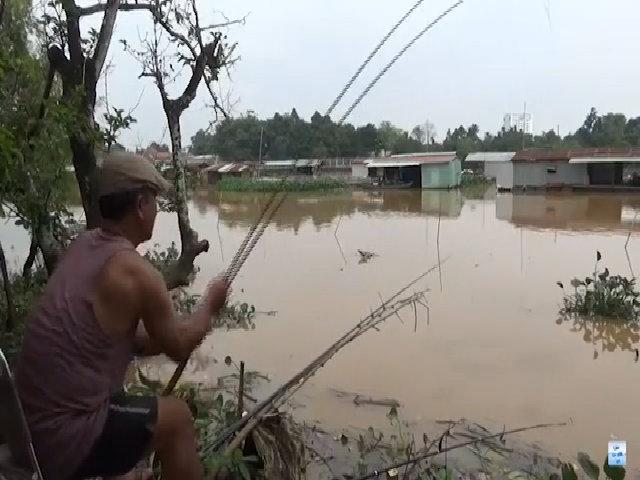 Cao thủ giật cá chép liên tục trên sông Cái