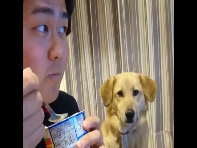 Chú chó tội nghiệp khi nhìn cậu chủ ăn