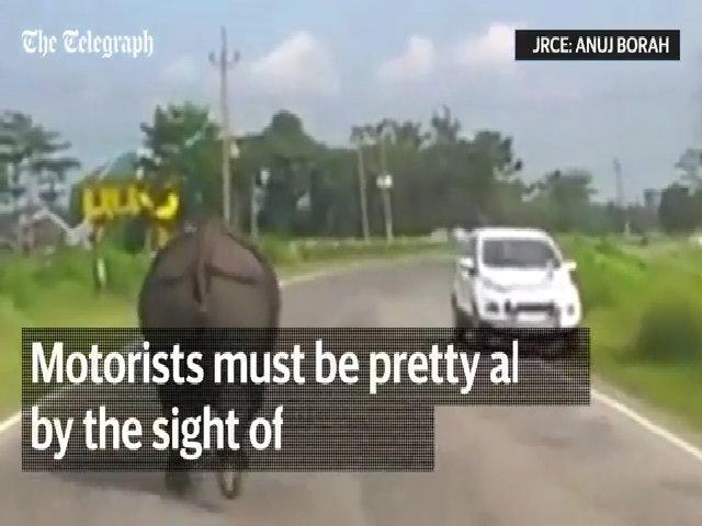 Tê giác khiến xe cộ dạt tứ phía trên đường ở Ấn Độ