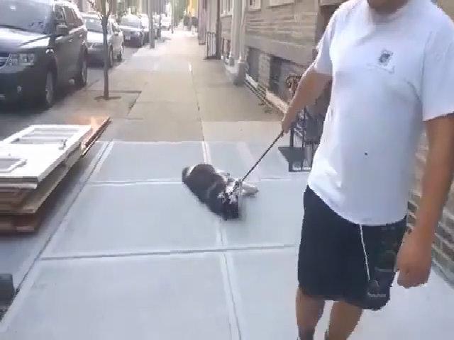 Chú chó ăn vạ vì không muốn về nhà