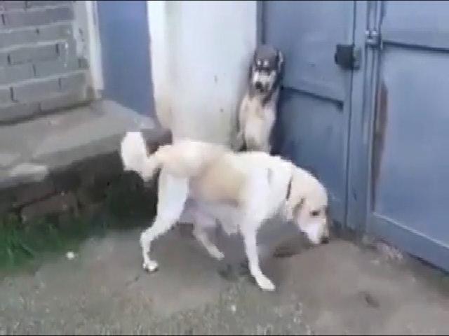 Chó mẹ nổi giận tấn công kẻ bắt nạt con mình