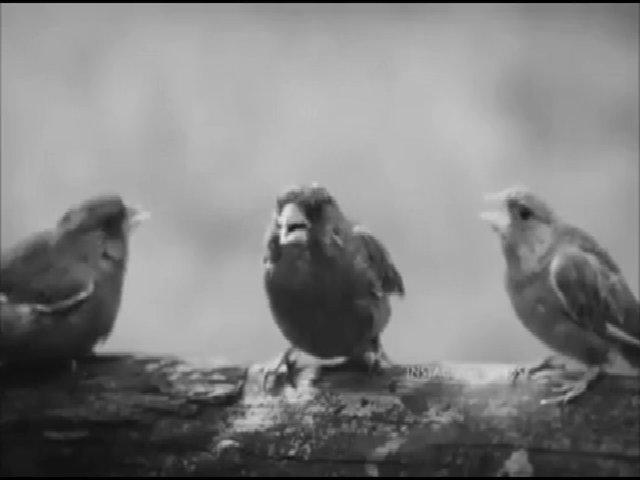 Khi chim trổ tài ca hát