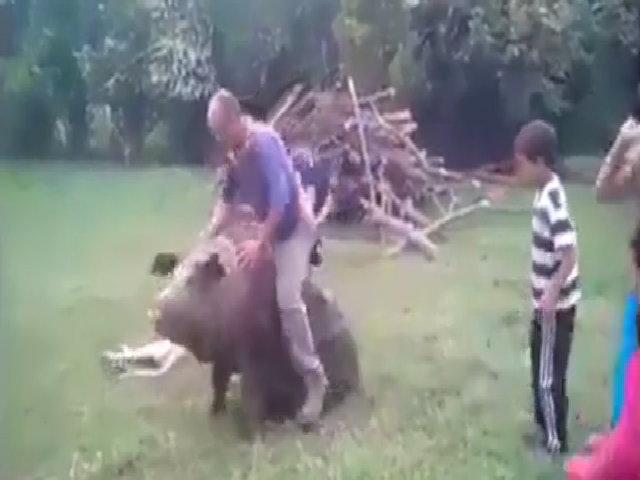 Các thanh niên ngã sấp mặt vì cưỡi lợn