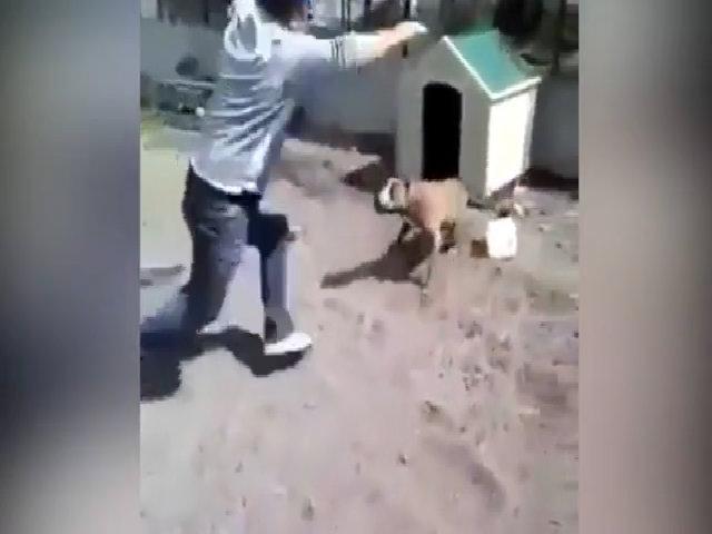 Hậu quả của việc trêu chó