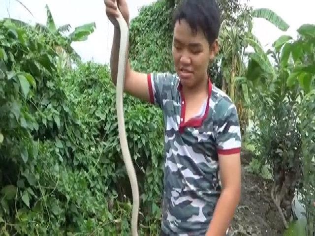 Bẫy rắn hổ hành 'khủng' ở Sài Gòn